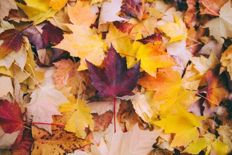 Oktober-Bild2